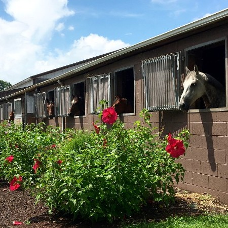 Stable and Flowers
